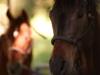 ranch-10011